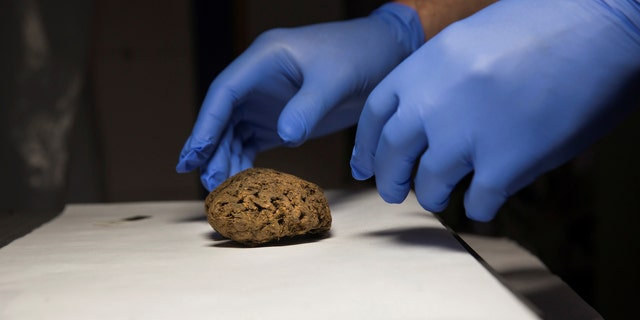 Fernando Serrulla, a forensic anthropologist of the Aranzadi Science Society, prepares to show one of the 45 saponified brains of people killed by forces of the dictator Francisco Franco. Picture taken June 8, 2017. (REUTERS/Juan Medina)