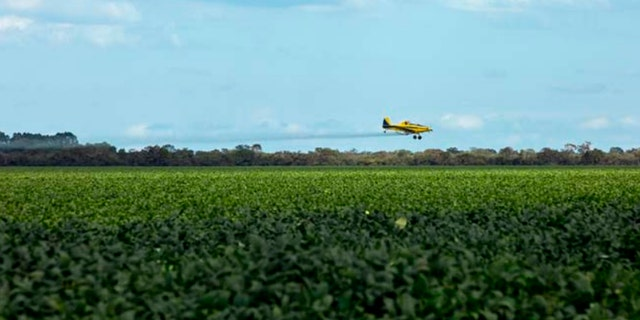 A crop plane aerial spraying pesticides on a soybean plantation in Piauí, Brazil.