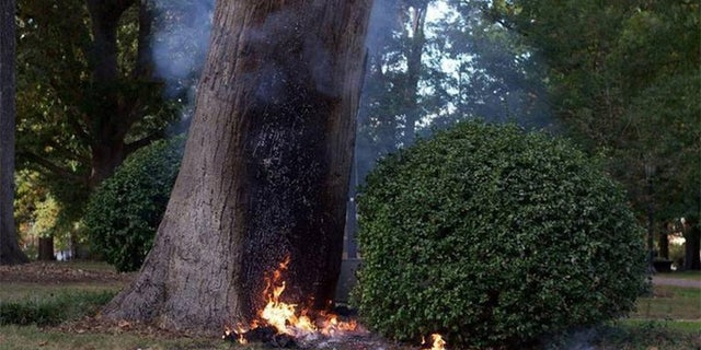 """A University of North Carolina Chapel Hill professor was burned after he tried to blow up the college's """"Tree of Knowledge"""" on Thrusday."""