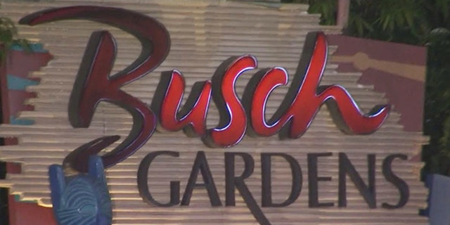 A man celebrating Fourth of July in Busch Gardens' Tampa Bay was hit by a stray bullet, police say.