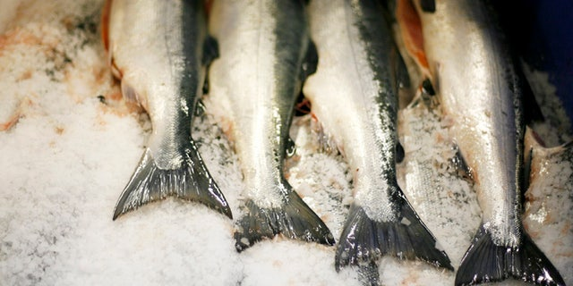 Sockeye salmon carcasses lie on ice after being cleaned at the Alitak Cannery in Alitak, Alaska July 30, 2008. REUTERS/Lucas Jackson  (UNITED STATES) - RTR20PL8