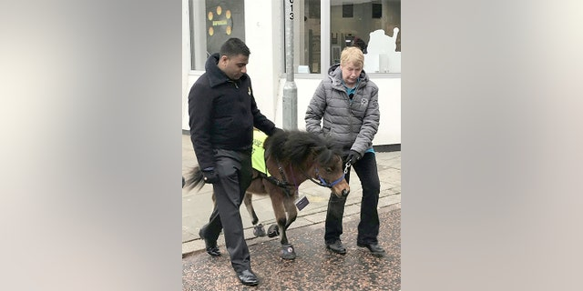 Digby, the mini horse, made a visit to Blackburn to introduce him to the town where he will live.