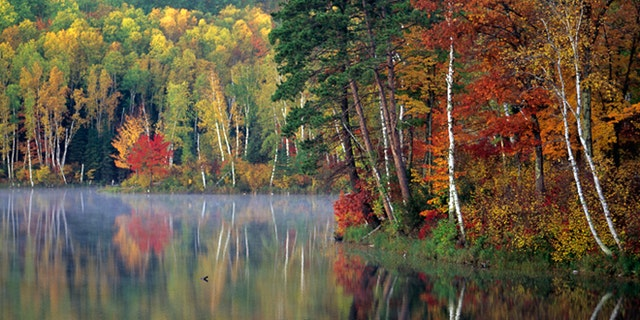Fall scenic Chippewa National Forest near Marcel.