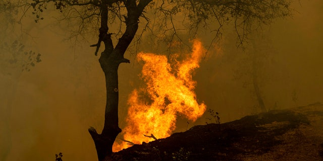 Flames from a backfire, set by firefighters trying to contain the Carr Fire, burn in Redding, Calif.