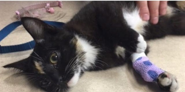 The kitten survived after the alleged abuse.
