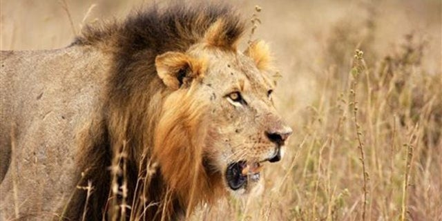 The death of a lion named Cecil sparked international outrage.