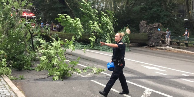 Officials clear out pedestrians after a tree fell in New York's Central Park.