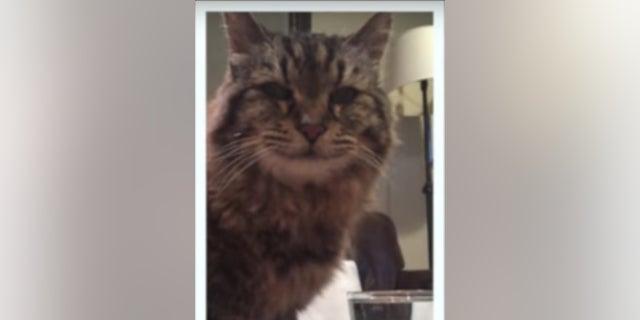 Corduroy the cat vanished in October.