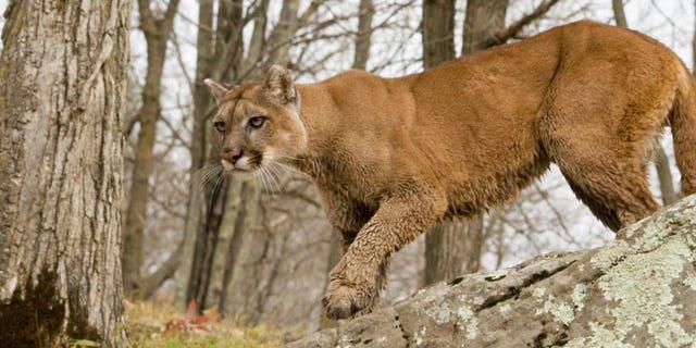 0764e854 Tips for surviving a wild animal encounter | Fox News