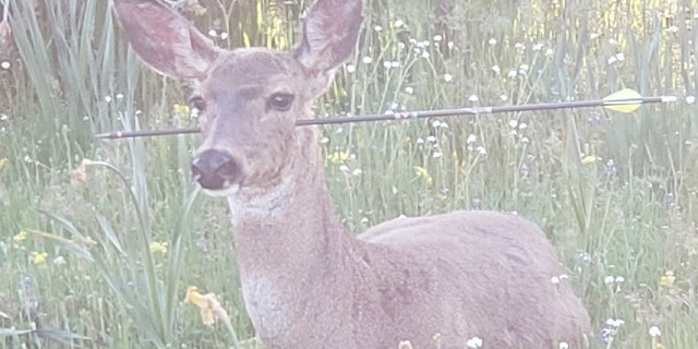 One of the deer discovered by an Oregon State Police officer had an arrow through its head.