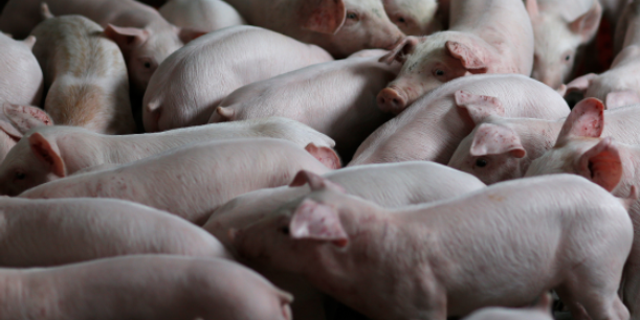 British firefighters rescued piglets from a barn fire, and were gifted them as sausages six months later.