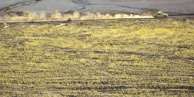 March 10, 2005: Wild flowers bloom as a car travels through Death Valley National Park, Calif.