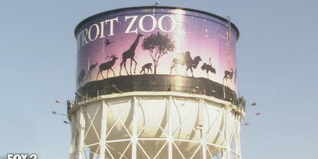 A wild coyote is on the loose at the Detroit Zoo.