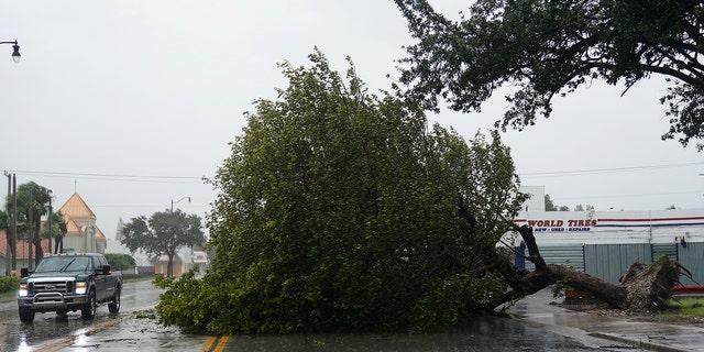 A fallen tree blocks Biscayne Blvd. as Hurricane Irma arrives in Hollywood, Florida, U.S., September 9, 2017. REUTERS/Carlo Allegri - RC11FB254B60