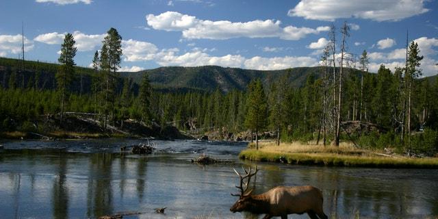 Yellowstone N.P. -