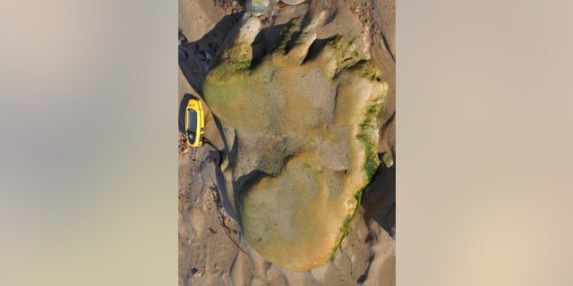 An image of the dinosaur footprint taken by Dr. Neil Clark - for scale, the yellow GPS next to the footprint is about 5.5 inches