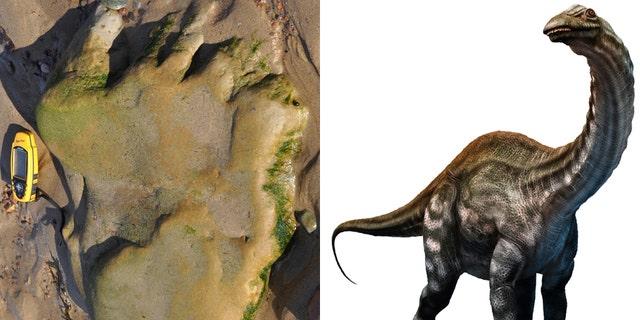 The dinosaur footprint/Apatosaurus, a type of sauropod (© The Hunterian, University of Glasgow/iStock/Warpaintcobra)