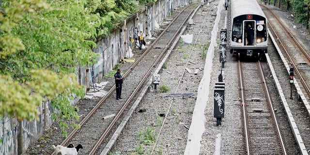 New York City police officers were at the scene trying to get the goats off the tracks.