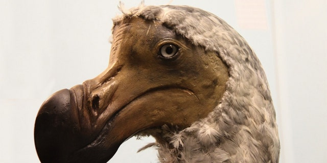 The government must act quickly before more of Earth's species go the way of the dodo.