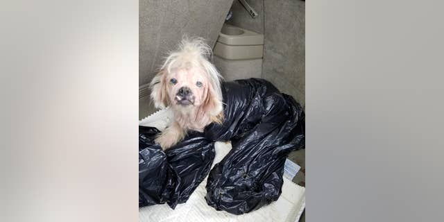 The dog, which as since been named Annabelle, was found in a garbage bag this week.
