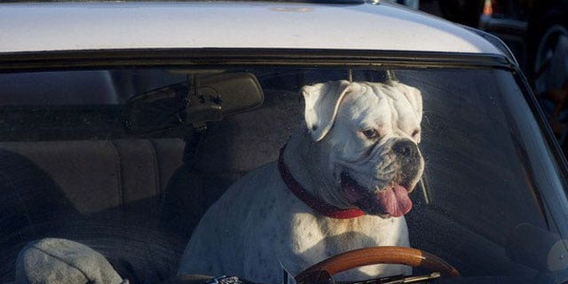 AAA study finds that Driving with Pets in your car is just as distracting as texting.