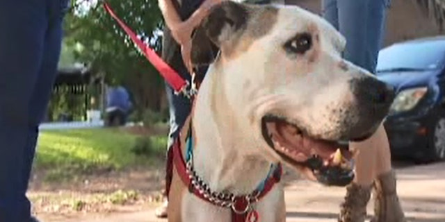 Ladybird was brought back to Texas after a 3-year, 1,700-mile journey.