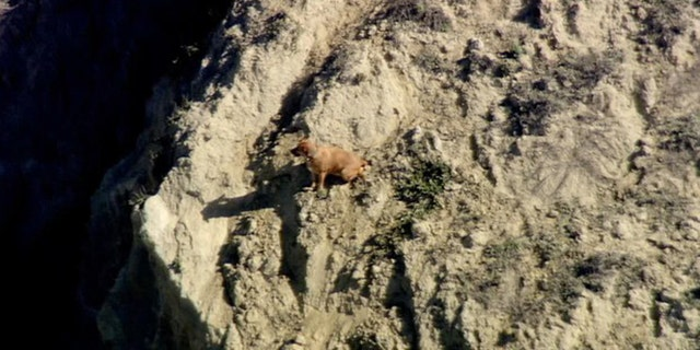 A California man died while trying to rescue his dog.