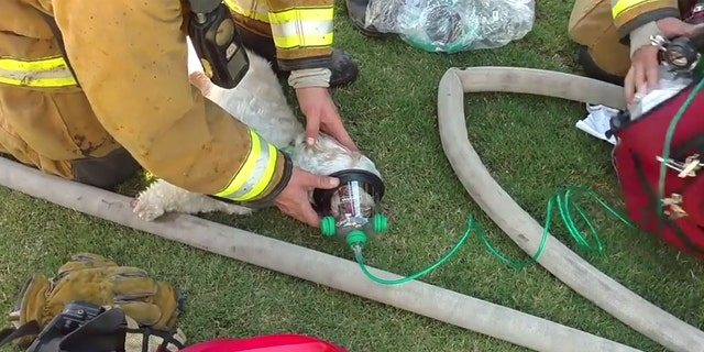 house fire By Travis Fedschun Published July 20, 2017 Fox News   Firefighters in California saved a small dog from a house fire and resuscitated him in a dramatic rescue caught on video.