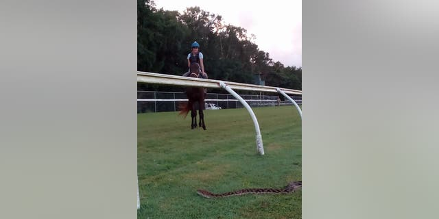 Jockey mistakes 15-foot python for 'big crack' on horse racetrack