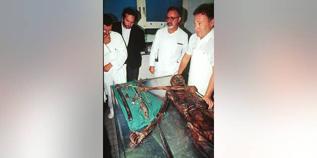 FILE - In this Jan. 16, 1998 file picture the 5,000-year-old body of Iceman Oetzi, discovered in 1991 on the Similaun glacier  is inspected by scientists in Innsbruck, Scientists say Oetzi  wore clothes made of brown bear pelt and roe deer when he died in the Alps 5,300 years ago.  Researchers in Italy used genetic analysis to determine that the materials were used for Oetzi's fur hat and his leather quiver respectively. Niall O'Sullivan, a researcher at the European Academy of Bolzano, Italy, said the study published Thursday Aug, 18, 2016  in the journal Scientific Reports also showed that other pieces of Oetzi's clothing came from domesticated animals. (AP Photo/str)