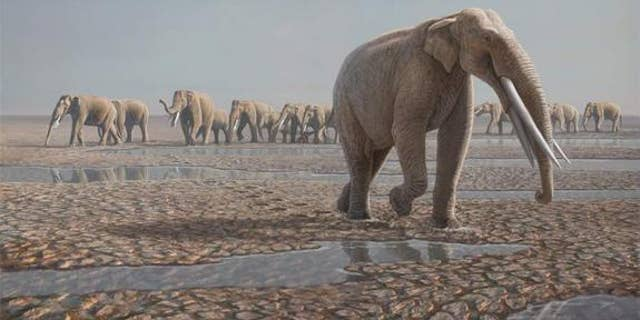 A reconstruction of the Stegotetrabelodon syrticus herd that likely made the tracks in the Arabian Desert.