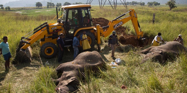 An excavator digs soil to bury the carcass of two endangered Asian elephants that were hit and killed by a passenger train near a railway track in Thakur Kuchi village on the outskirts of Gauhati, Assam state, India, Sunday, Nov. 19, 2017.