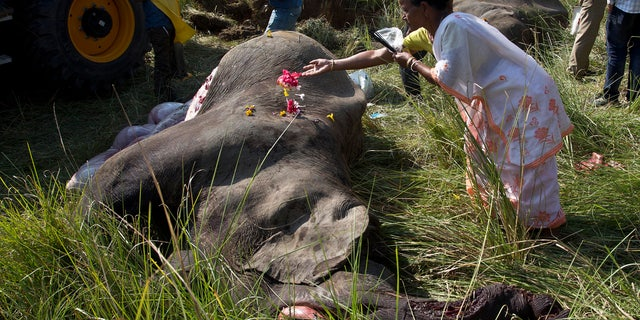 An Indian woman offers flowers on the carcass of one among two endangered Asian elephants that were hit and killed by a passenger train near a railway track in Thakur Kuchi village on the outskirts of Gauhati, Assam state, India, Sunday, Nov. 19, 2017.