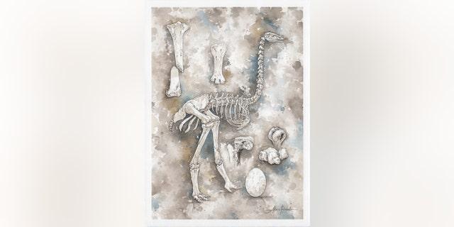 Elephant bird illustration (Credit: Alain_Rasolo).