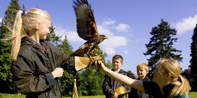 Falconry at Gleneagles.