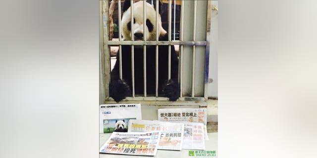11-year-old Tuan Tuan is alive and well, say zookeepers at the Taipei Zoo.