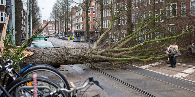 A man who escaped unharmed picks up his gloves after his scooter was hit by a crashing tree uprooted by heavy winds in Amsterdam, Netherlands, Thursday, Jan. 18, 2018.