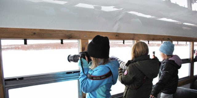 On the lookout for Polar Bears in Northern Canada.