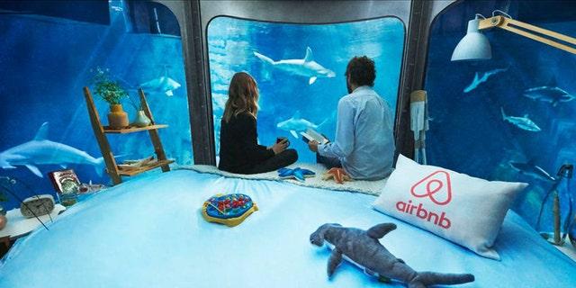 Spend a night in the shark tank at the Paris Aquarium.