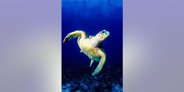 10 strange animals from around the world   Fox News
