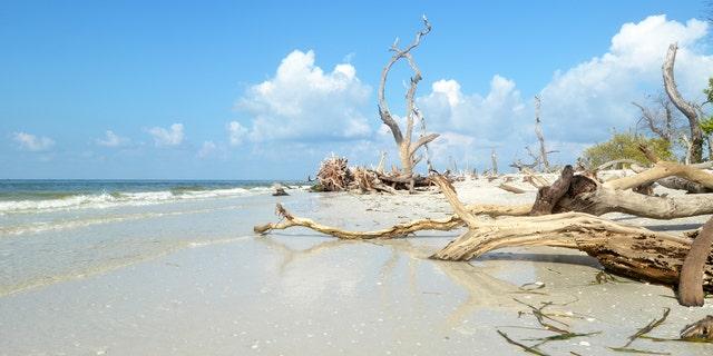 Damaged Landscape of Cayo Costa State Park in Florida.