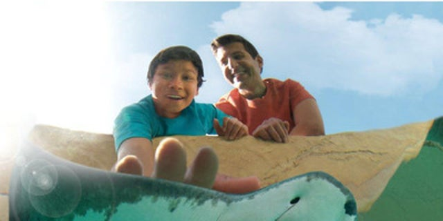 At SeaWorld parks, families can get up close and learn about amazing animals.