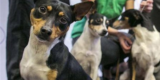 The dogs were on the way to a dog show in Vallejo scheduled for Thursday, June 7, 2019.