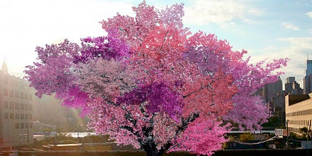 The Tree of 40 Fruits is edible contemporary art.