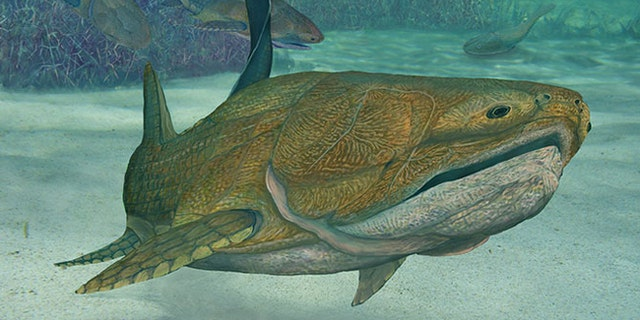 The earliest known species with what we would recognize as a face was an armored, beady-eyed prehistoric fish.