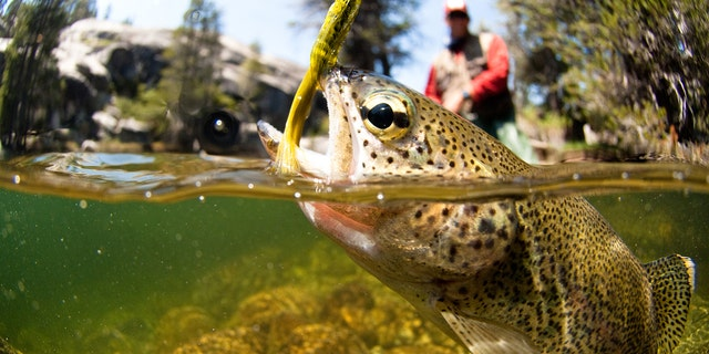 These new lure designs will keep your line tight for the foreseeable future.