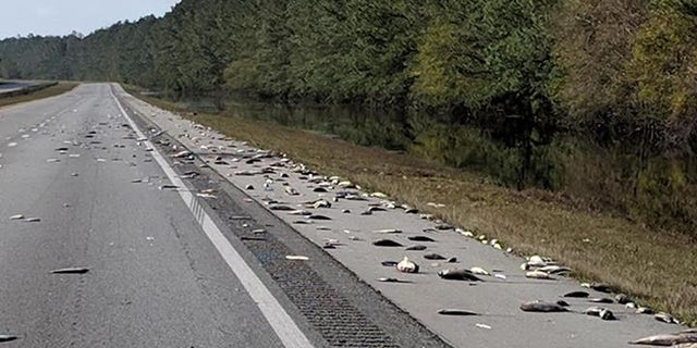Dead fish can be seen along the Interstate 40 in North Carolina where floodwaters from Hurricane Florence have receded.