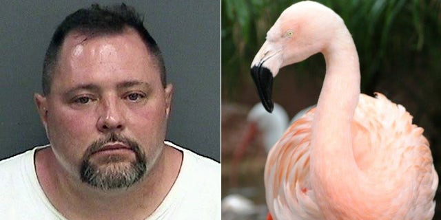 These undated photos show Joseph Corrao (left) and Pinky, a flamingo at Busch Gardens in Tampa, Fla.