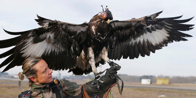 Defending against the threat of weaponized drones is a problem that has produced a myriad of solutions, some more realistic than others. In this photo, a French army falconer works with a golden eagle as part of a military training for combat against drones in Mont-de-Marsan French Air Force base, Southwestern France, February 10, 2017.