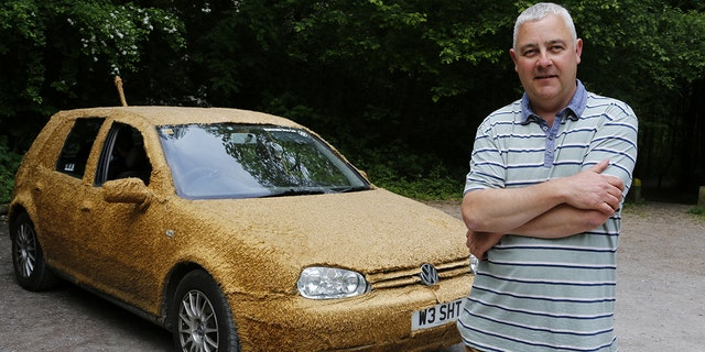 "A chauffeur got so fed up with driving luxury vehicles that he bought himself this £200 runaround - and covered it in FUR. Justin Scrutton (pictured), the owner of a chauffeur company, bought the wrecked old Volkswagen Golf because he fancied driving something that he didn't mind if his two dogs ruined. See National News story NNCAR; But the 46-year-old decided to go one step further and spent a barmy £180 covering the ancient Golf in ten metres of teddy-bear fabric. Justin, from Dartford, Kent said: ""I was trying to sleep one night and for some crazy reason I thought 'why not?'"